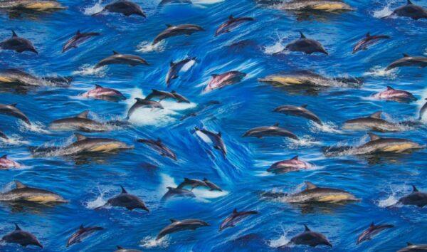 digitale tricot dolfijnenq
